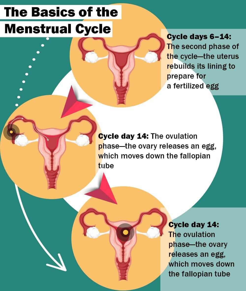 can you get pregnant on your period